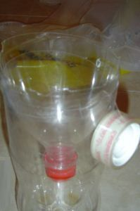 Horse and deer fly trap.  Coke bottle trap with rotten meat.  Include Acetone (Nail Polish or Varnish Remover) – Acetone is also a component of cattle breath so many species of horse flies are also significantly attracted to this liquid.