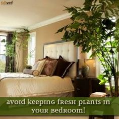 Vastu tip for bedroom: Indoor plants bring freshness in the house but avoid placing fresh plants in your bed room. Plants release carbon-di-oxide at night, which is harmful for us.  Be balanced. Be Natural. Be You. - Omved