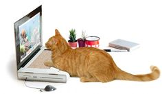 Cat Scratch Laptop is the Purrfect Toy for Geeky Cats