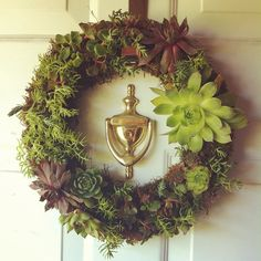 #Succulentwreath #dahlinfukuda@nhwolff  http://www.russwholesaleflowers.com/wholesale-succulent-sale  RusswholesaleFlowers.com offers the best wholesale succulent prices available to the public online.  wholesale succulents for bouquets, special events, wreaths, diy and more.  3 different sizes to meet your needs.