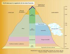 Perfil ideal para la vegetación de las Islas Canarias