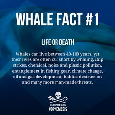 Support our campaign to protect minke whales from the harpoons of the Japanese whaling fleet, donate at http://seashepherdglobal.org/nemesis