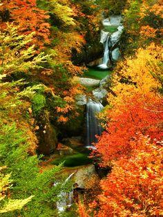 "lifeisverybeautiful: ""Yamanashi, Japan by Makoto Hashimuki via TOKYO CAMERA CLUB Autumn Leaves """