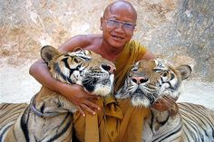 Tiger Temple in Thailand. You can walk the tigers, eat breakfast with the monks and feed the baby tigers- head monk is so nice and loves these animals and thanks to visitor donations they provide the best medical care, food, exercise, and life they could have outside of the wild.