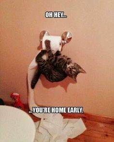 Picture # 254 collection funny animal quotes pics) for June 2016 – Funny Pictures, Quotes, Pics, Photos, Images and Very Cute animals. Funny Animal Quotes, Cute Funny Animals, Funny Animal Pictures, Funny Cute, Funniest Animals, Funny Photos, Clean Animal Memes, Super Funny, Cat Memes Clean