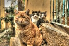 500px / The look hdr by Fanis Fphotography