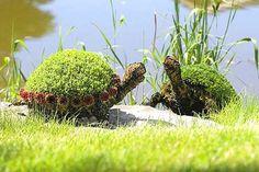 Tortoise Topiary