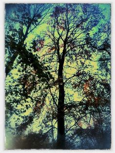 Forest Garden Shovelstrode, Sussex