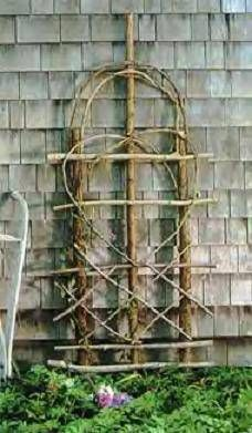 Trellis from vines - gotta a pile of these vines from clearing property.