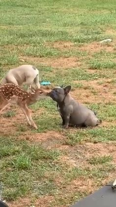 Cute Wild Animals, Baby Animals Pictures, Super Cute Animals, Cute Animal Photos, Cute Animal Videos, Cute Little Animals, Funny Animal Pictures, Animals Beautiful, Cute Baby Dogs
