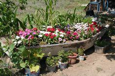 Selimye boat garden