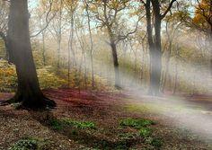 Black Woods, Woolton, Merseyside, UK