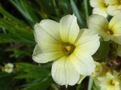 Imagens de Flores de Cetim