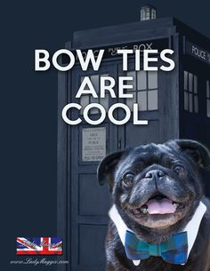 Bowties are cool! - British pug