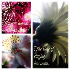 Song of Solomon ~ Flowers appear on the earth.the time of spring has come.
