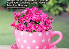 Good Morning Sunday Wishes Images Download - Good Morning Images, Quotes, Wishes, Messages, greetings & eCards Sunday Wishes Images, Happy Sunday Images, Good Morning Sunday Images, Good Morning Wishes, Morning Pics, Tea Cup Planter, Have A Beautiful Sunday, Pottery Painting Designs, Butterfly Decorations