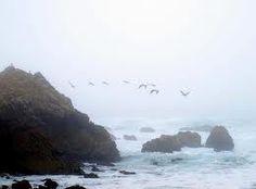 Misty birds