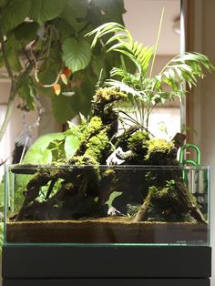 京都精華大学水槽学部の水草ブログ - 可動式テラリウム