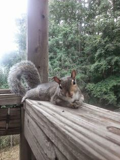 Animals And Pets, Baby Animals, Funny Animals, Cute Animals, Cute Squirrel, Baby Squirrel, Squirrels, Squirrel Pictures, Funny Animal Pictures