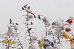 Birds in the litter trees: Changzhi, Shanxi Province Plastic Shopping Bags, Plastic Bags, Landscape Photography, Nature Photography, Marine Debris, Save Our Oceans, Graduation Project, Plastic Pollution, Plastic Waste
