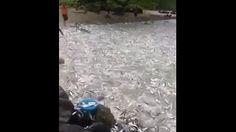 Thế này tha hồ mà bắt cá nhé - Giải trí tổng hợp
