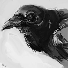 Illustration by Michele Svengsouk  Raven study. I got to say that Art has been kicking my ass the last couple of days. I'm putting this up so I don't break my rule 2 days in a row of posting these pieces if I like them or not. #art...