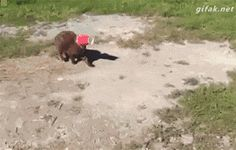 rainbow in your eyes | catsdogsgifs: More Funny GIFs here