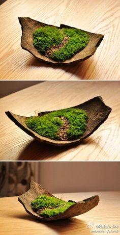 Miniature path miniature Path is part of Moss garden - Ikebana, Moss Terrarium, Garden Terrarium, Ferns Garden, Succulents Garden, Indoor Garden, Indoor Plants, Balcony Gardening, Gardening Books
