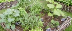 Que tal preparar um jardim aromático?