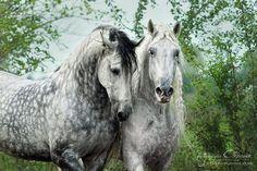 der-schmidtsche-hof: by www.photo-equine.com