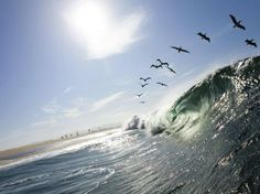 post by Halex  A flock of brown pelicans watched from the top of the movement of perfect early morning in Newport Beach waves, California. by Joshua Kast