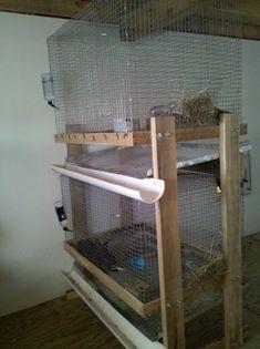 Bunny Barn - Taylor's Bunnies Show Rabbits, Meat Rabbits, Raising Rabbits, Rabbit Hide, Rabbit Farm, Bunny Cages, Rabbit Cages, Bunny Sheds, Rabbit Hutch Indoor