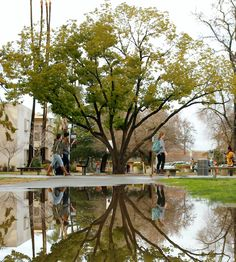 Fresno State Rainy Day, Jan. 2016