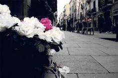 Gracia Barcelona photos  | by SuiteLife Barcelona (www.SuiteLife.com)