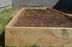 How to Build a Raised Bed Vegetable Garden | Easy Assembly & Low Cost #gardening