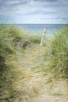 path-to-sea-informal-shoreline-walking-trail-leading-fence-long-grass-saint-michel-beach-les-hopitaux-brittany-45226090.jpg 298×450 pixels