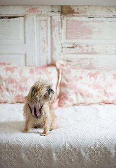 nycbrusselsgriffon: Here is Eloise, photographer Corbin Lee Gurkin's Griffon from Charleston North Carorina in the guest bedroom where she enjoys her three o'clock nap. Bar Outdoor, Outdoor Pallet, Door Headboards, Headboard Ideas, Bedroom Ideas, Vintage Doors, Rose Cottage, Cottage Chic, Old Doors