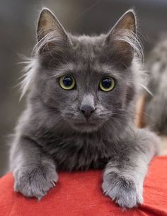 So Cute Cat And Nice Eyes http://ift.tt/2sMlhA2
