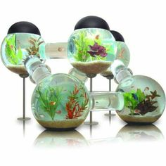 "if i had fish i would love to have one of these!! i have a turtle, maybe she would like it too! a super modern ""house"""