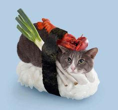 Sushi Cats (neko-sushi) by Tange Nakiushi.  aye dress maki up for halloween as this!!
