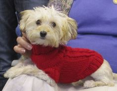 Lizzy Dog Sweater pattern by Carmela Biscuit