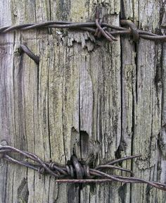 barbed wire stapled onto post