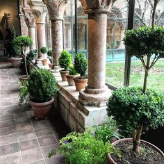 """""""Perfect day for  #thecloisters  #nyc #gardens #relics #architecture I recommend its beautiful!"""""""