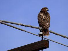 Otowi: Christmas Bird Count Colorado Springs 6b 12/19/15