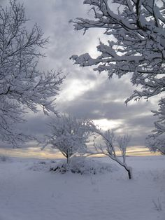 Trees and snow, a beautiful combination