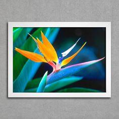 Flor Ave do Paraíso - Comprar em Encadreé Posters