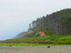 Forest meets ocean