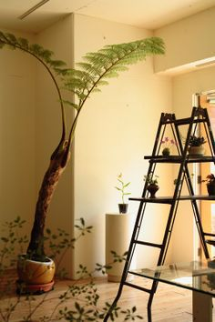 indoor plants wow, mum would loooove this tree fern Terrariums, My Home Design, House Design, Indoor Garden, Home And Garden, Home Goods Decor, Home Decor, Indoor Palms, Tree Fern