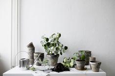 En inredningsblogg om inspiration för inredning & design - Hemtrender Go Green, Inspiration, Design, Plants, Biblical Inspiration, Plant, Inspirational, Planets