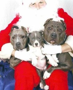 """Santa looks like """"Mess with these guys and you'll get more than coal in your stocking for the rest of your life!"""""""
